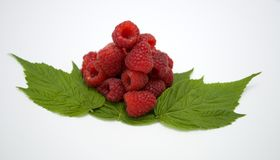 Bright red fresh raspberries, from a family orchard. The raspberry type is Polana. In Serbia Royalty Free Stock Photography