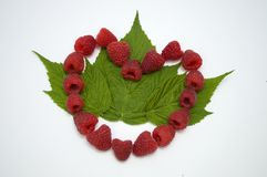 Bright red fresh raspberries, from a family orchard. The raspberry type is Polana. In Serbia Stock Photo