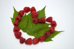 Bright red fresh raspberries, from a family orchard. The raspberry type is Polana. In Serbia Stock Photography