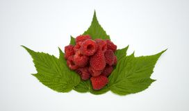 Bright red fresh raspberries, from a family orchard. The raspberry type is Polana. In Serbia Stock Image