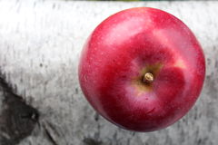 Bright red of freshly picked apple on birch branch Royalty Free Stock Image