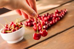 Bright red freshly picked early sweet cherries stock photos