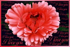 Bright red heart-shaped flower on a black background with the words stock image