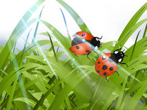 Bright red Lady Bug Stock Image