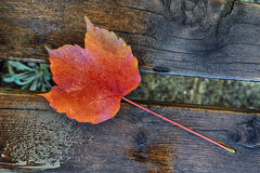 Bright red leaf of grape lying wet on a wooden boards in the rain Stock Photography