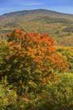 Bright red maple on hillside overlooking Sandwich Range, New Ham Stock Photography