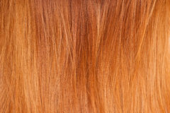 Bright red natural hair Royalty Free Stock Photos