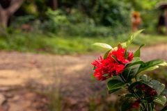 Bright red needle on the quiet road.  Royalty Free Stock Photography