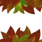 Bright red orange green autumn leaves abstract frame background Stock Photography