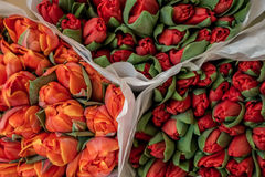 Bright red and orange tulips bunches. Bright colorful red and orange tulips bunches Royalty Free Stock Photos