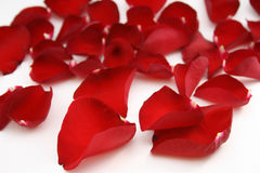 Bright red petals. Red rose petals isolated on white Stock Photo