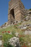 Bright red poppies grow among the Greek stone ruins Stock Images