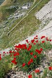 Bright red poppies grow among the Greek stone ruins Royalty Free Stock Images