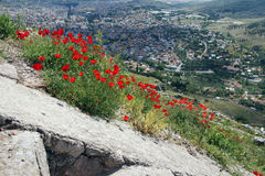 Bright red poppies grow among the Greek stone ruins Stock Photography