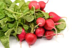 Red Radish on White Background. Bright red radishes with long green stems and leaves arranged on a seamless white background Royalty Free Stock Photo