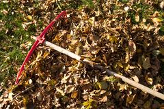 Bright red rake resting on a heap of freshly raked autumn leaves. Autumn fall colors royalty free stock photography