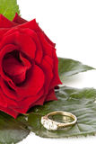 Bright red rose with diamond ring Royalty Free Stock Photo