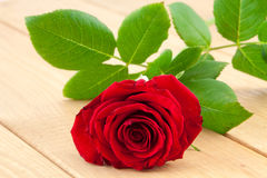 Bright red rose on wood background Stock Photos
