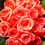 Bright red roses bunch. A bunch of bright red roses,fresh lovely  flowers Royalty Free Stock Images