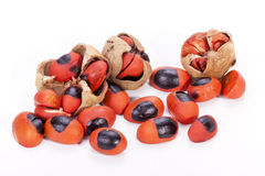 Bright Red Seeds and Burst Pods of Natal Mahogany Tree Stock Images