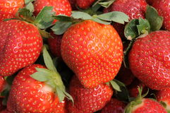 Bright red strawberries Stock Image