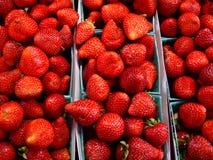 Bright Red Strawberries Stock Photo