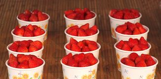 Bright Red Strawberries in Paper Cups. Beautiful ripe strawberries are being sold in paper cups Royalty Free Stock Photo