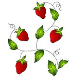 Bright Red Strawberries on Vine. A clip art illustration featuring bright red strawberries on a vine Royalty Free Stock Image