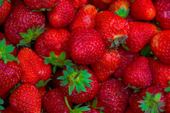 Bright red Strawberry grows on a Bush, from the land of rising strawberry. seedbeds. Bright red Strawberry grows on a Bush, from the land of rising young Stock Photo
