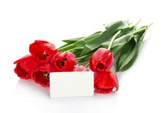 Bright red tulips and empty card for the letter Royalty Free Stock Photos