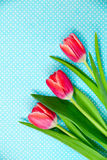 Bright red tulips flowers on a patterned blue background. Royalty Free Stock Images