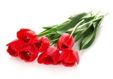 The bright red tulips Royalty Free Stock Image
