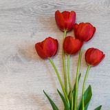 Bright red tulips on light wooden background. Beautiful spring floral mock up. Greeting card for women`s or mother`s day. Flat lay, top view, copy space royalty free stock photo