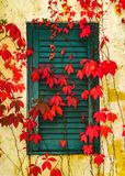 Fall Leaves covering a wall in Napa Valley. Bright red vine leaves gracing the wall of a winery in Napa Valley Royalty Free Stock Images