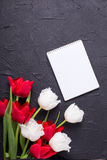 Bright red and white tulips flowers and empty tag on black textu Royalty Free Stock Photography