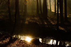Bright reflection of the sun in a forest pool. Bright reflection of the rising sun in a forest pool surrounded by shadows and beams of light as the rising sun Stock Image