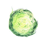 Bright ripe tasty delicious beautiful green agriculture summer salad cabbage chopped and sliced watercolor. Hand illustration Royalty Free Stock Photo