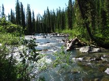 Bright river surrounded by Siberian taiga royalty free stock photography