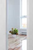 Bright room seen through the doorway Royalty Free Stock Image