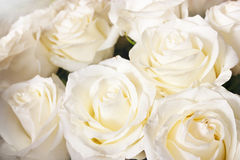 Bright roses Royalty Free Stock Photos
