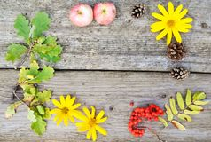Bright round composition of yellow flowers, Rowan, cones and acorns and apples on rustic wooden background in autumn. closup. Flat royalty free stock image