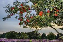 Bright rowan berries on a tree against beautiful background. Bright rowan berries on a tree against blue beautiful background Royalty Free Stock Photos