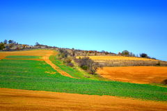 Bright rural colored field autumn landscape Royalty Free Stock Image