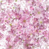 Bright Sakura Pattern Royalty Free Stock Photos