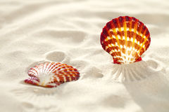 Bright Scallop shell on fine white beach sand Royalty Free Stock Images