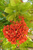 Bright scarlet flowers Stock Images