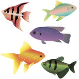 Bright Sea Fishes Royalty Free Stock Photography