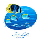Bright sea pattern with tropical fish. Royalty Free Stock Photo