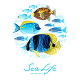 Bright sea pattern with tropical fish. Stock Image