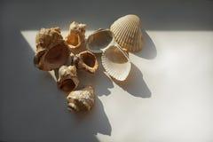 Bright sea shells stock images